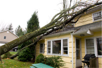 house with tree fallen on it